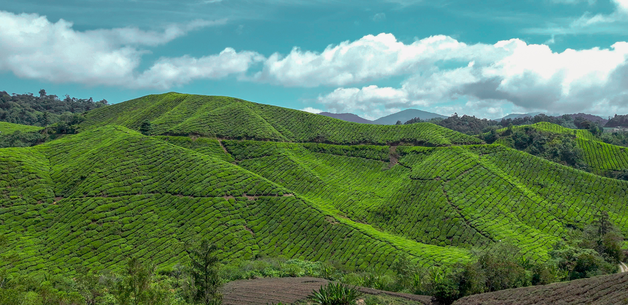 Exciting things to do in Cameron Highlands