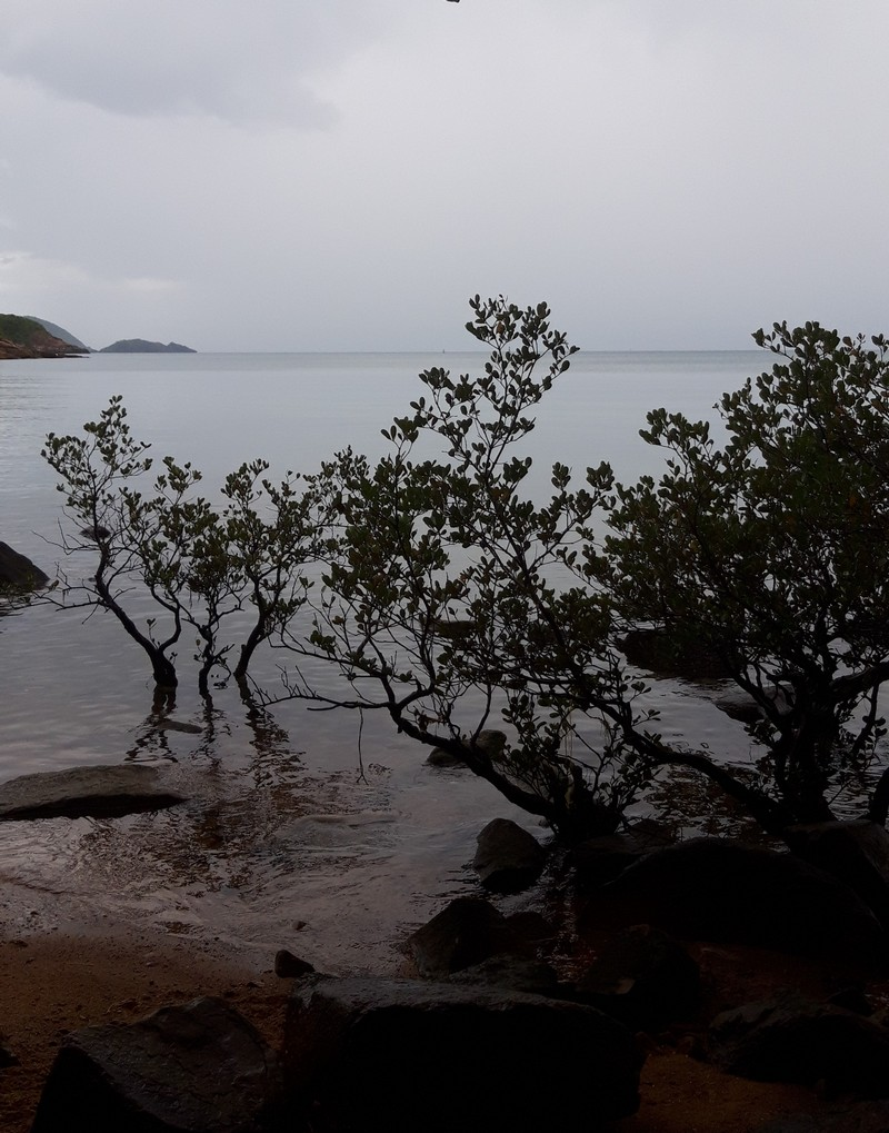 I know that Con Dao island is home to some native species that come originally from here to the rest of the world therefore, I decided to visit Con Dao National Park.